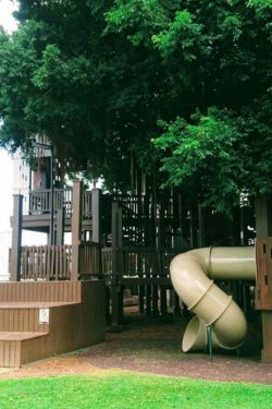 Fig Tree Playground
